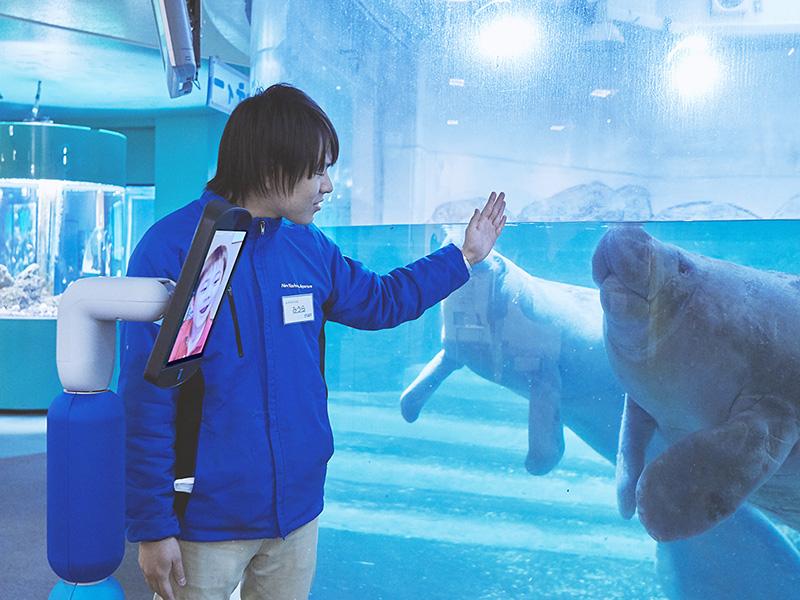 日本でも珍しい山上の水族館でアメリカマナティに癒されよう!